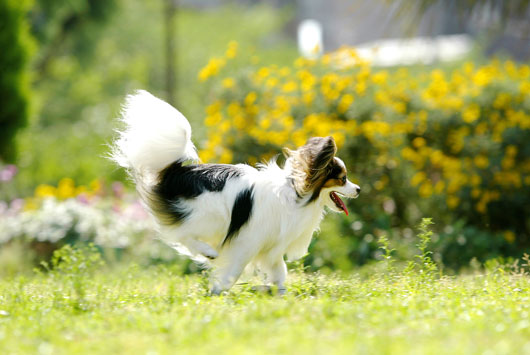 犬の画像 p1_18